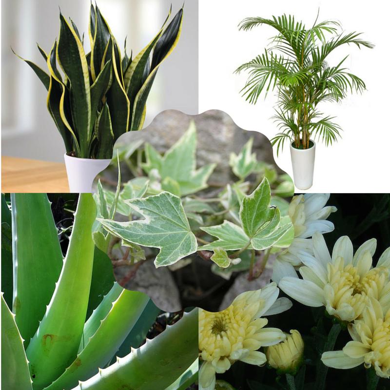 5 planten die je helpen beter te slapen